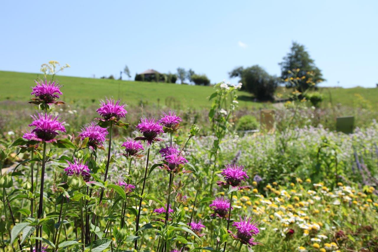 Schöne Wildblumen im Laissez Fair Garten