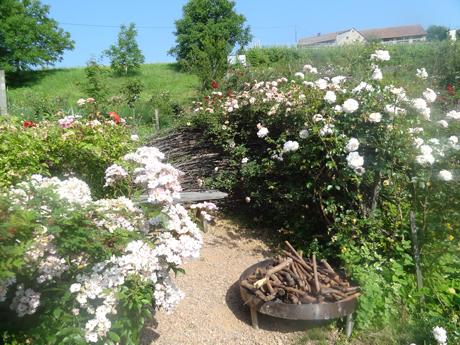 Steifzug durch den BIo-Rosengarten